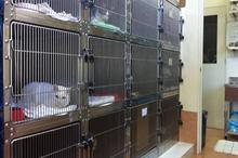 入院室・猫舎