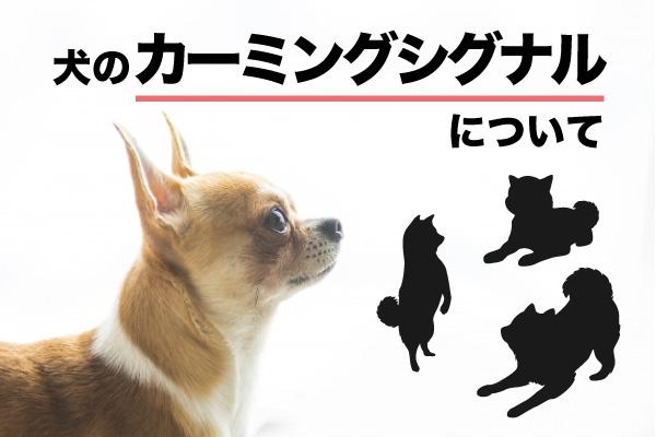 犬のカーミングシグナルについて