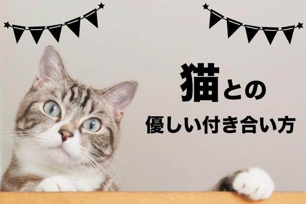 ネコとの優しい付き合い方