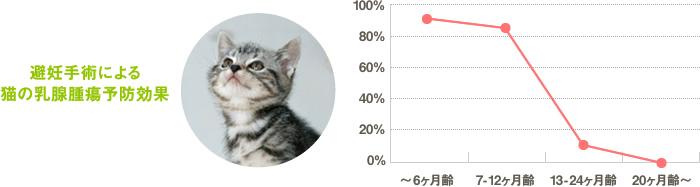 避妊手術による猫の乳腺腫瘍予防効果