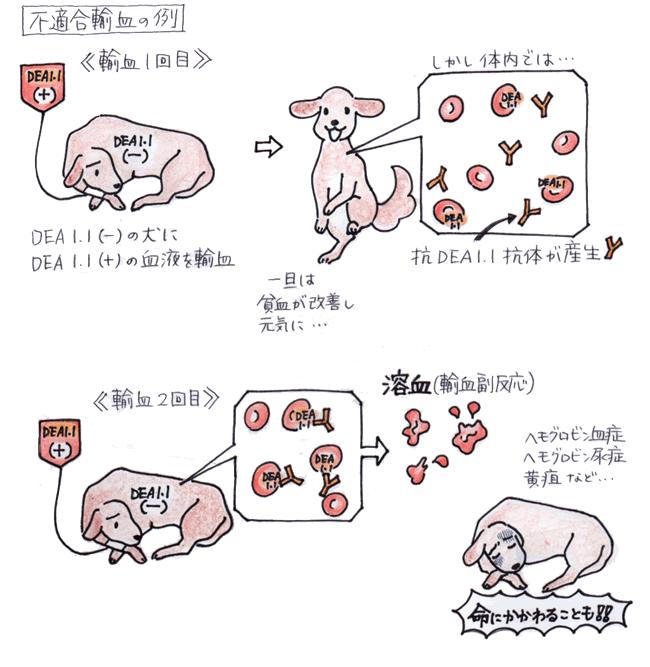 不適合輸血の例